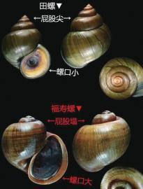 济南市场未见福寿螺 监管部门提醒市民发现售卖可举报