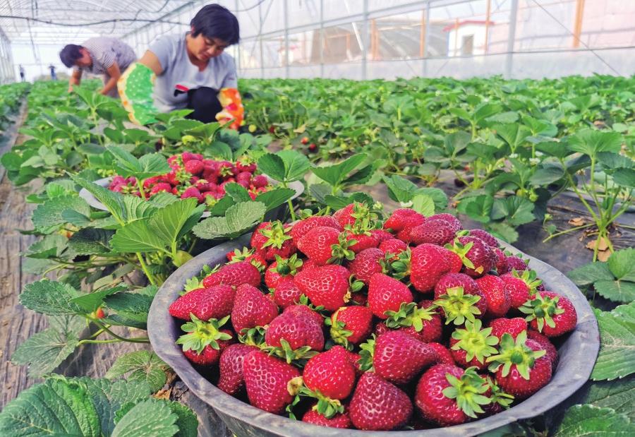 唐王镇打造美丽乡村享受绿色美好生活