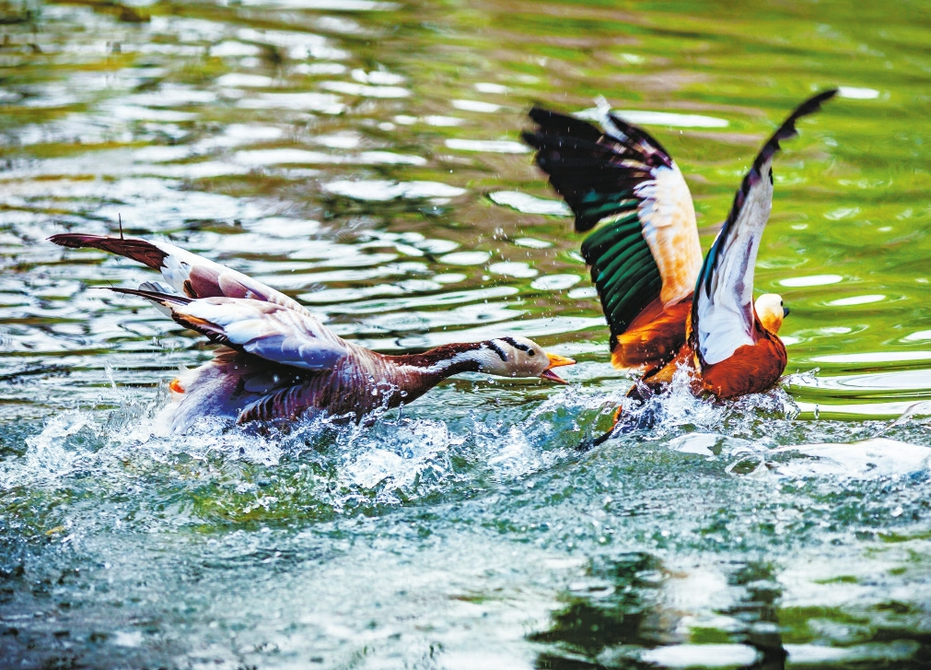 爱鸟护鸟 守望自然 山东省第39届爱鸟周在济南野生动物世界启幕