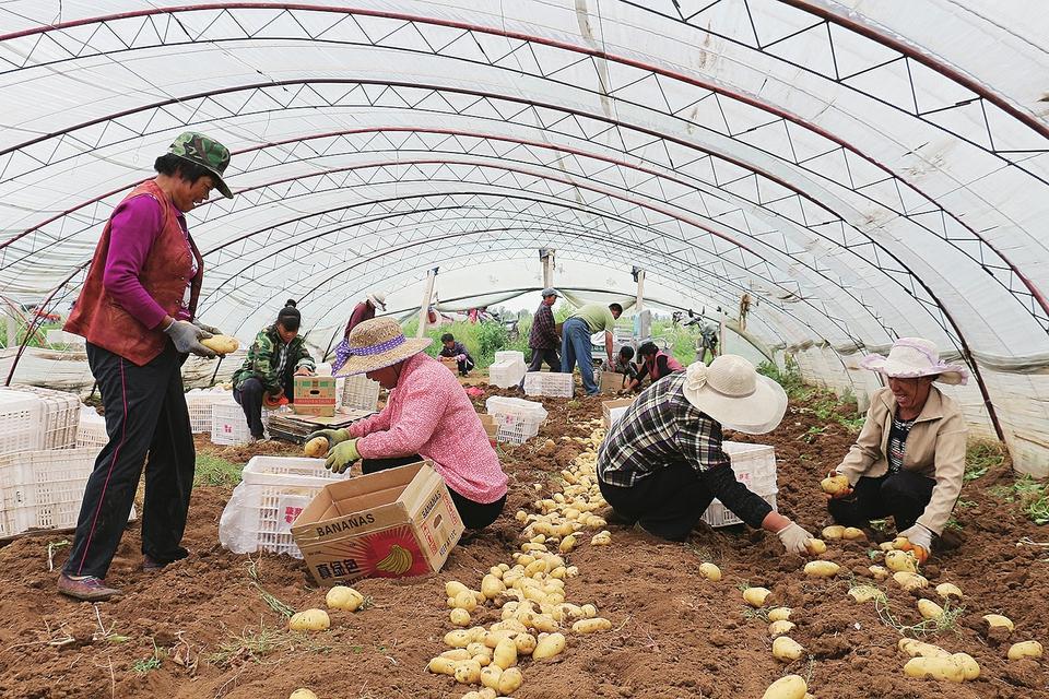 土地流转释放劳动力 多元化增收带动村民致富 济南探索农业劳动力转移新路径