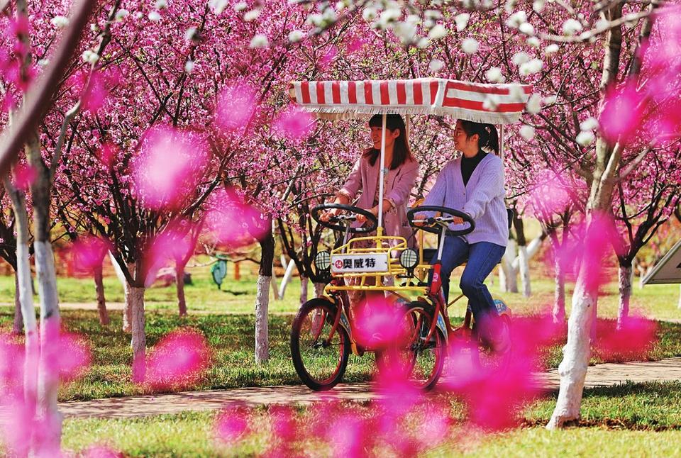 花满泉城笑春风