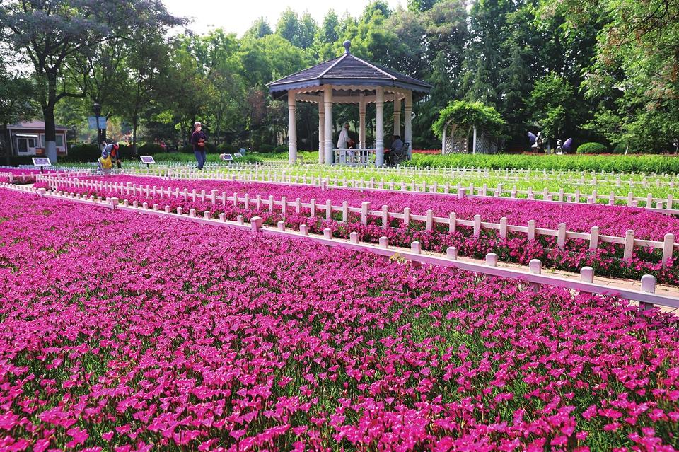花卉水族市场变身海棠玫瑰园
